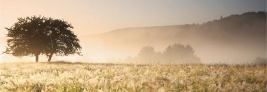 A vontade humana: o ponto fraco da criação